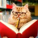 Professor Meowington is ready to help you